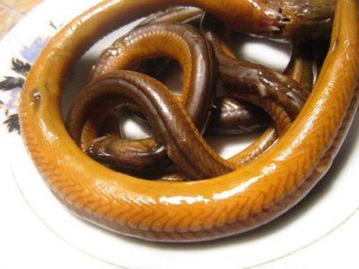 Món lươn với công dụng chữa bệnh cực tốt bạn đã biết chưa
