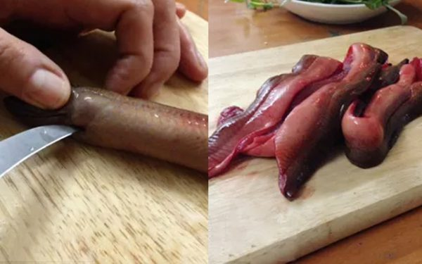 Sơ chế lươn đúng cách để không bị tanh